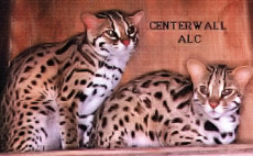 Asian Leopard Cats used in Centerwall Studies